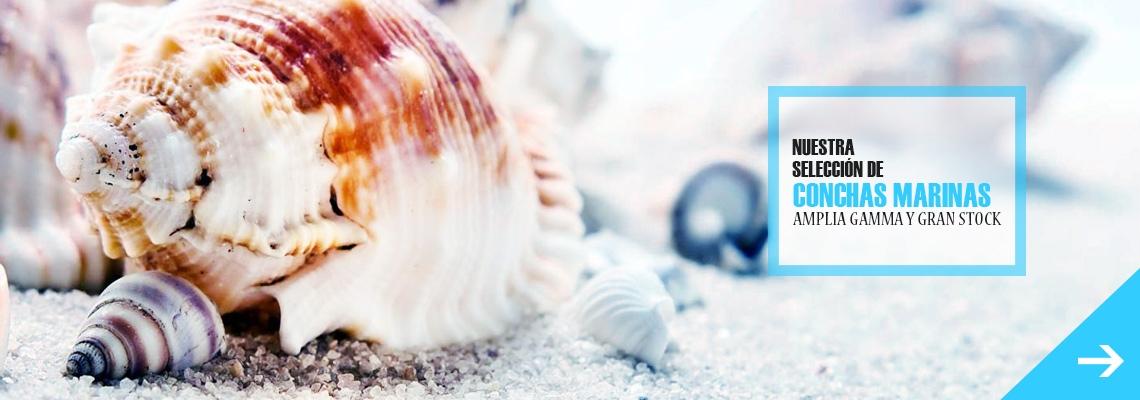 Conchas marina